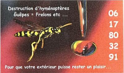 spécialiste insectes